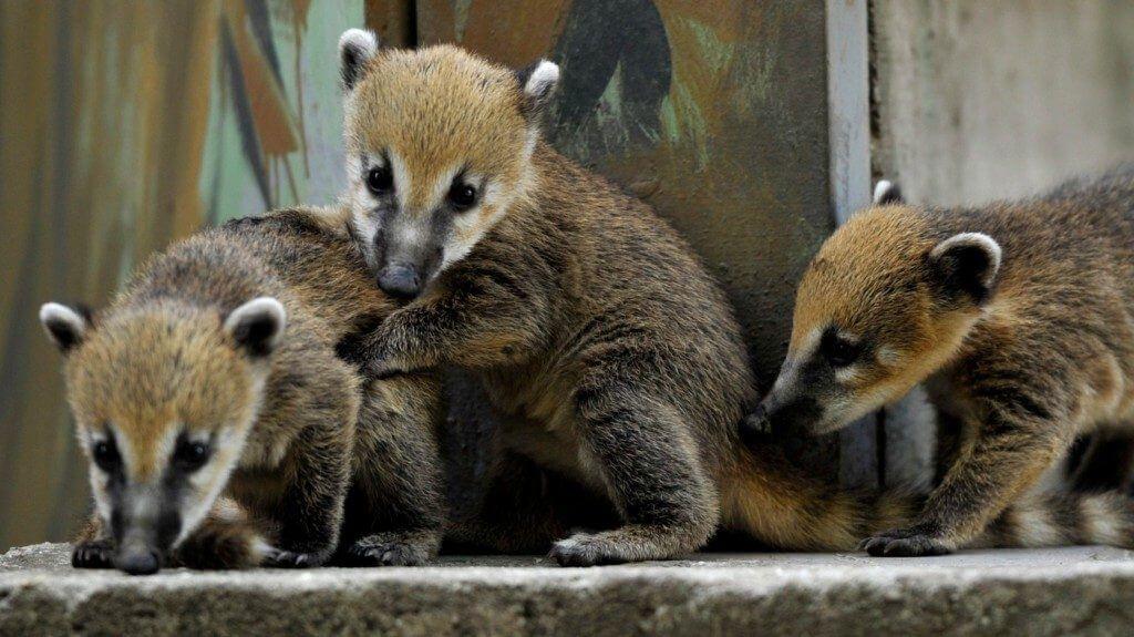Fotó: ZooZoo.hu