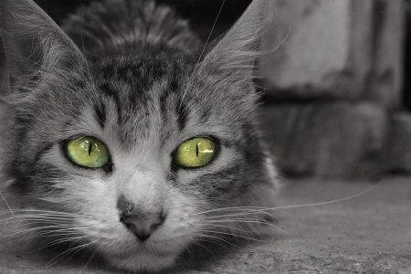 Fotó: Yenix