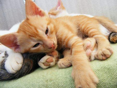kitten-88354_960_720