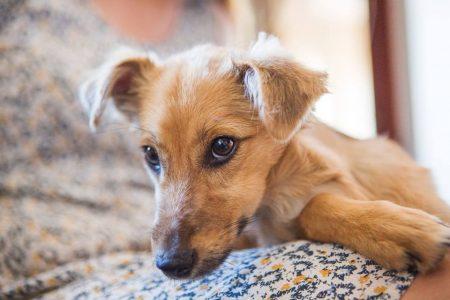 Delta. Őt tegnap mentették Bonka kutyus gazdái. Félig éhenhalt, törött lábú, az ellátatlan törés miatt halálraítélt kutyus. Most szervezik a műtétjét.