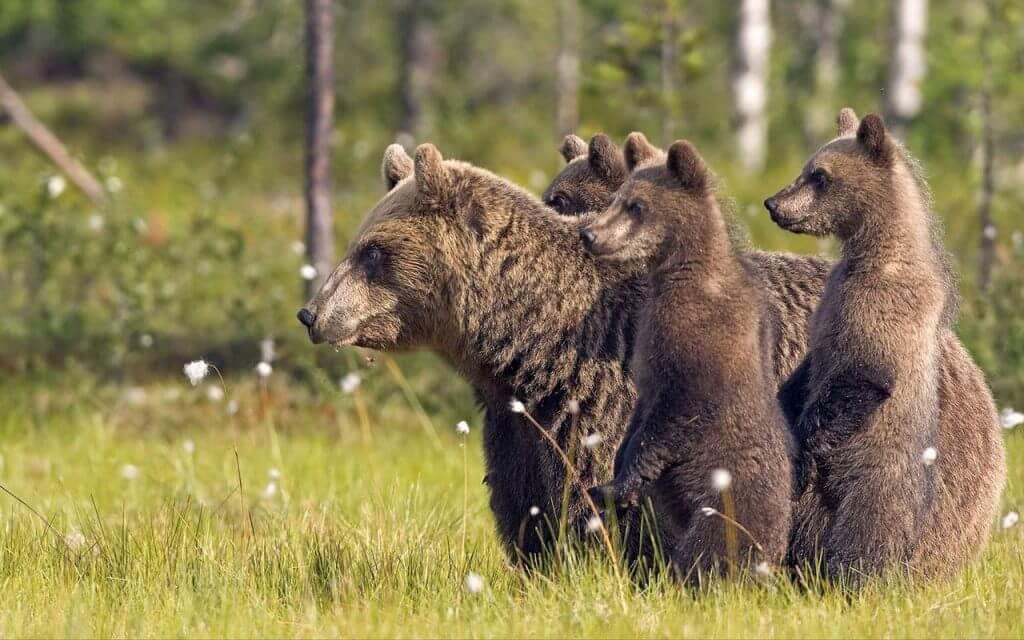 Fotó: Google Play - Wild Animals Live Wallpaper