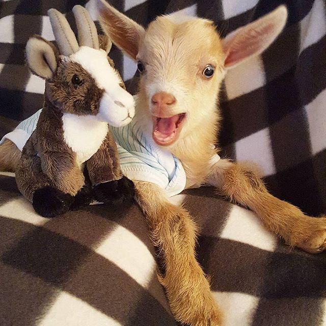 Pinterest via Amazing Animal Photos