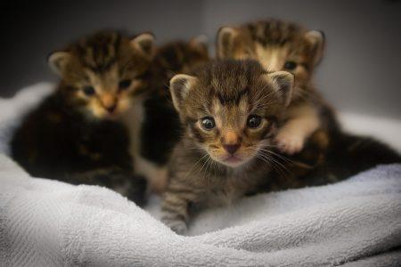 kittens-1824367_960_720