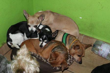 Fotó: Állat és Ember Állatvédő Egyesület