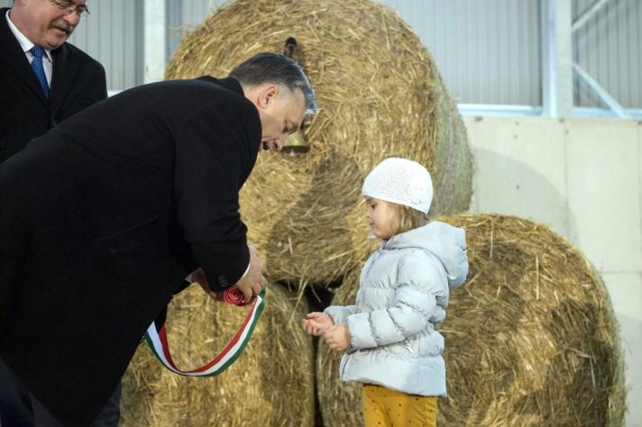 Magyarország mezőgazdasági ország, az agráriumban igenis van jövő, az ágazatnak jelentős szerepe van a növekedésben, ezért a mezőgazdaságban dolgozóknak meg kell adni a tiszteletet - mondta Orbán 2014-ben, amikor Felcsúton felavatta Flier János vállalkozó marhatelepét, majd Alcsútdoboz mellett a Mészáros-féle Búzakalász 66 Felcsút Kft. mangalicatelepének átadásán vett részt (Fotó: MTI/Koszticsák Szilárd)