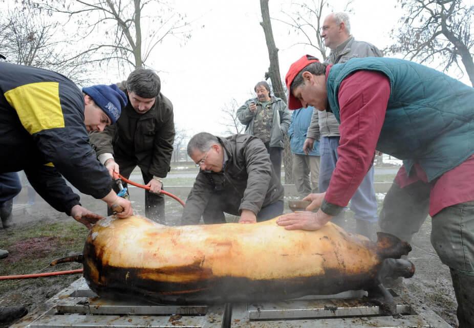 Kósa Lajos közel 8 éve, amikor még polgármesterként kapargatott egy perzselt disznót a Kismacsi Közösségi Ház udvarán, ahol a Debreceni Nyugdíjas Egyesület tagjai tél végi disznótoros napot tartottak (Fotó: Oláh Tibor / MTI)
