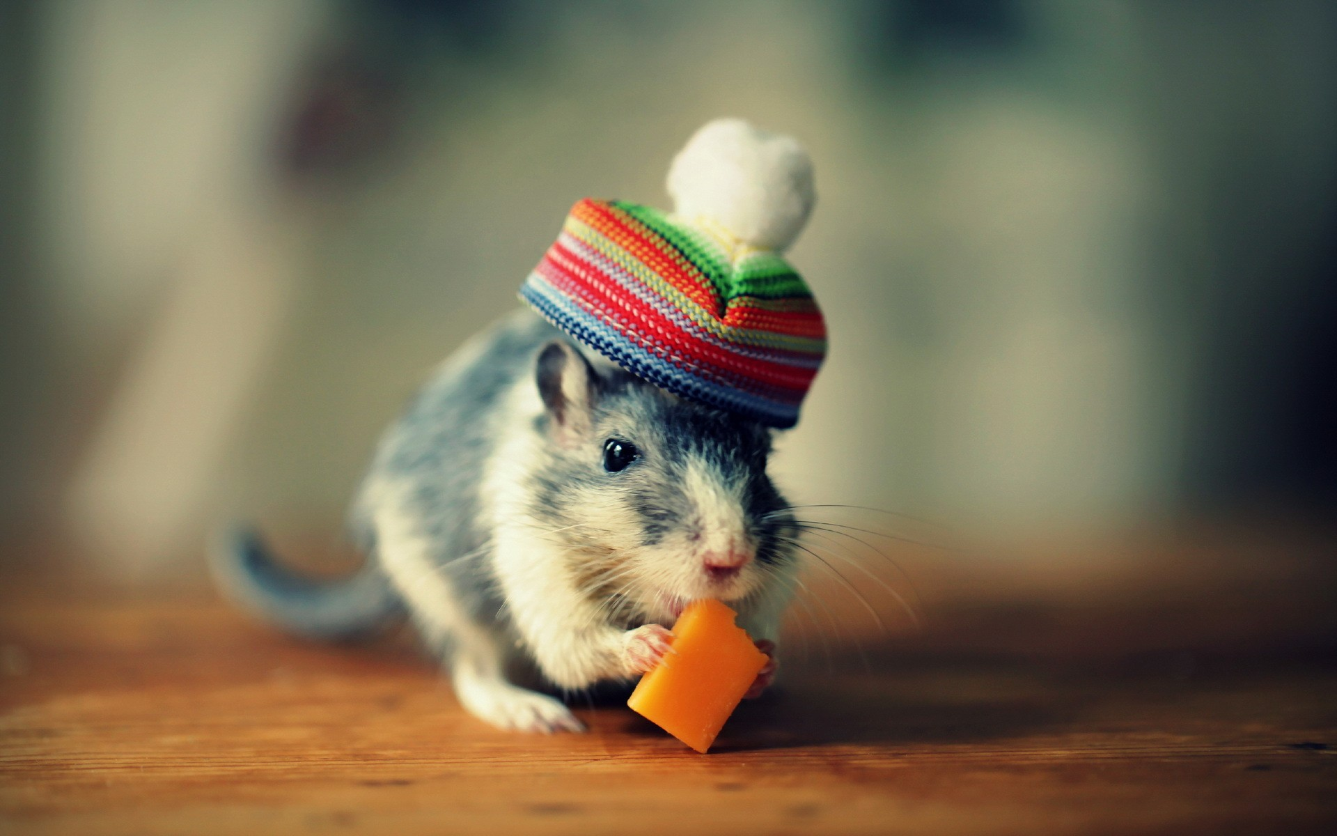 cute-mouse-funny-hat-hd-wallpaper-63921752